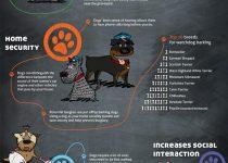 infografia_benecifios_tener_un_perro