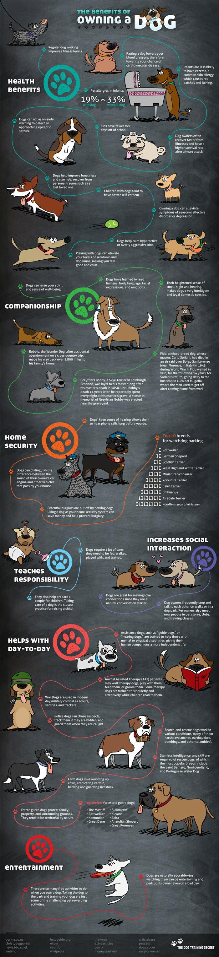 Beneficios tener un perro