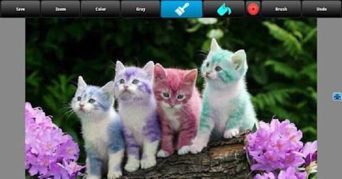 Pon un toque de color a tus fotos con Color Splash Pro