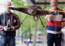 El Gato Volador: Juego de memoria para niños