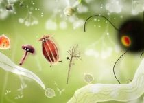 Botanicula: Descubre la vida secreta de todas las plantas