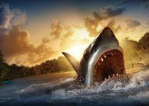 Fondo de un sorprendente tiburón saliendo del mar