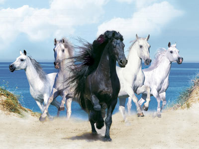 Horses Wallpapers: Caballos en tu pc