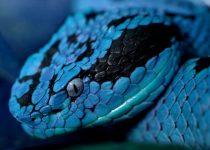 Snake Wallpapers: Foto de una serpiente muy llamativa colorida
