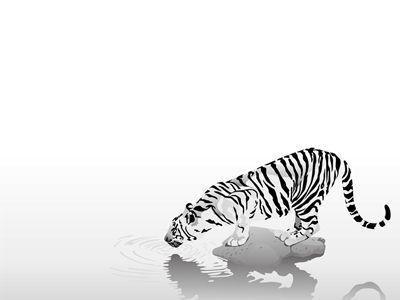 Tiger Wallpapers: Las mejores tomas de tigres de bengala