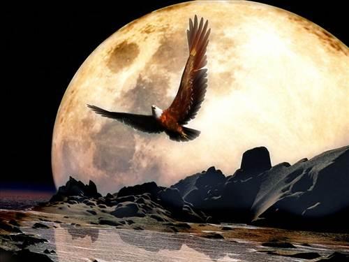 Un hermoso fondo de un águila en medio de la luna