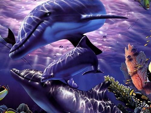Bellos Delfines de alta calidad para ti