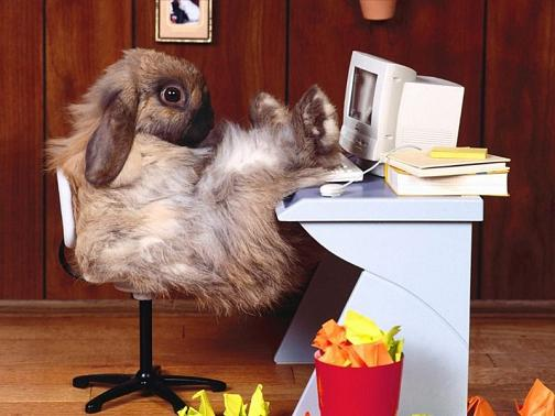 Conejo Cibernetico fondo
