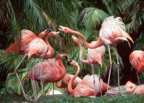 Flamingos en tu pc como fondo