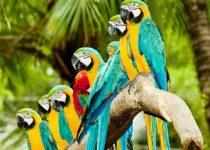 Preciosos y coloridos Guacamayas en tu pc