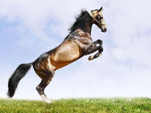 Wallpaper de caballos en tu pc