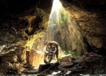 Fondo de tigre en una cueva