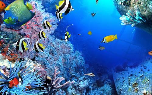 AquaReal: Precioso salvapantalla de agua y peces