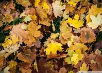 wallpaper otoño hojas hd