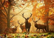wallpapers otoño hd gratis